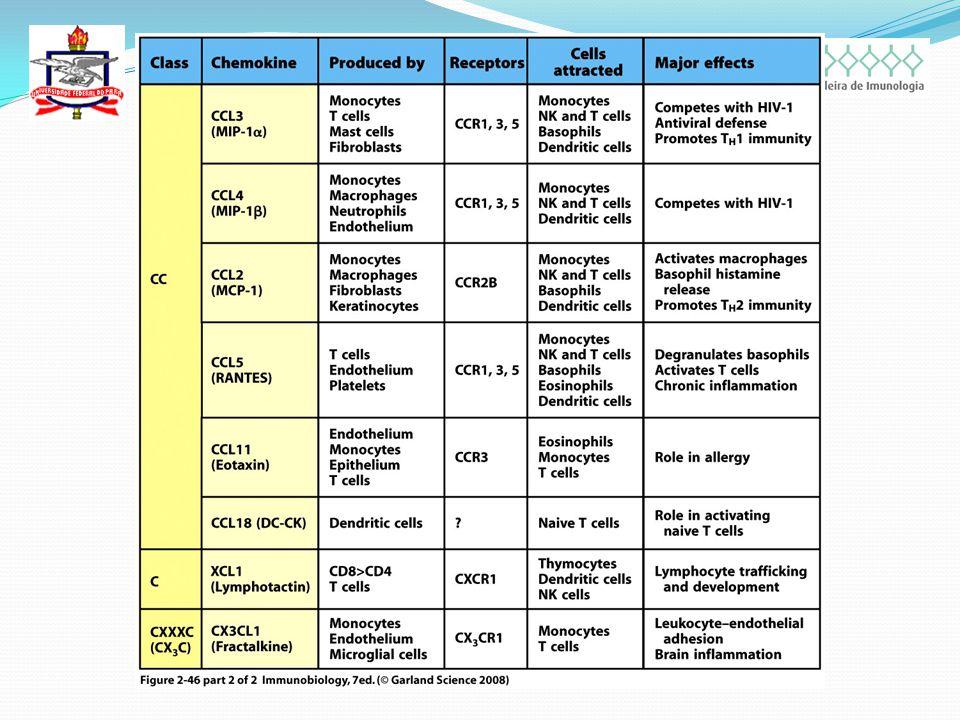 QUIMIOCINAS Pertencem a dois grandes grupos: As quimiocinas CC – 2 cisteínas adjacentes; As quimiocinas CXC – 2 cisteínas separadas por um aminoácido qualquer; Dois casos incomuns são: A linfotactina – 1 cisteína; A fractalquina – 2 cisteínas separadas por 3 aminoácidos CX 3 C; Quimiocinas tais como IL-8 e MCP-1 atuam tanto no rolamento dos leucócitos nas células endoteliais quanto na migração dos leucócitos;