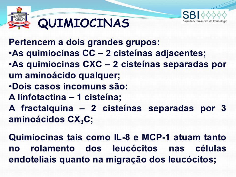 QUIMIOCINAS Pertencem a dois grandes grupos: As quimiocinas CC – 2 cisteínas adjacentes; As quimiocinas CXC – 2 cisteínas separadas por um aminoácido