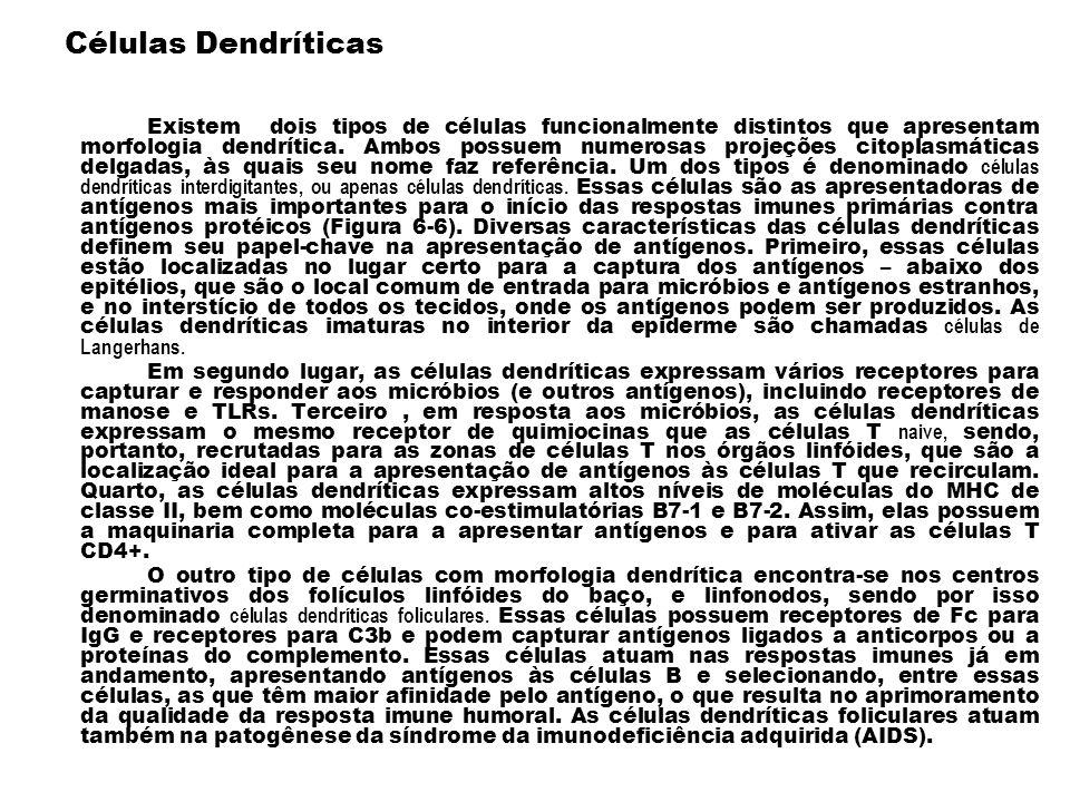 Células Dendríticas Existem dois tipos de células funcionalmente distintos que apresentam morfologia dendrítica. Ambos possuem numerosas projeções cit