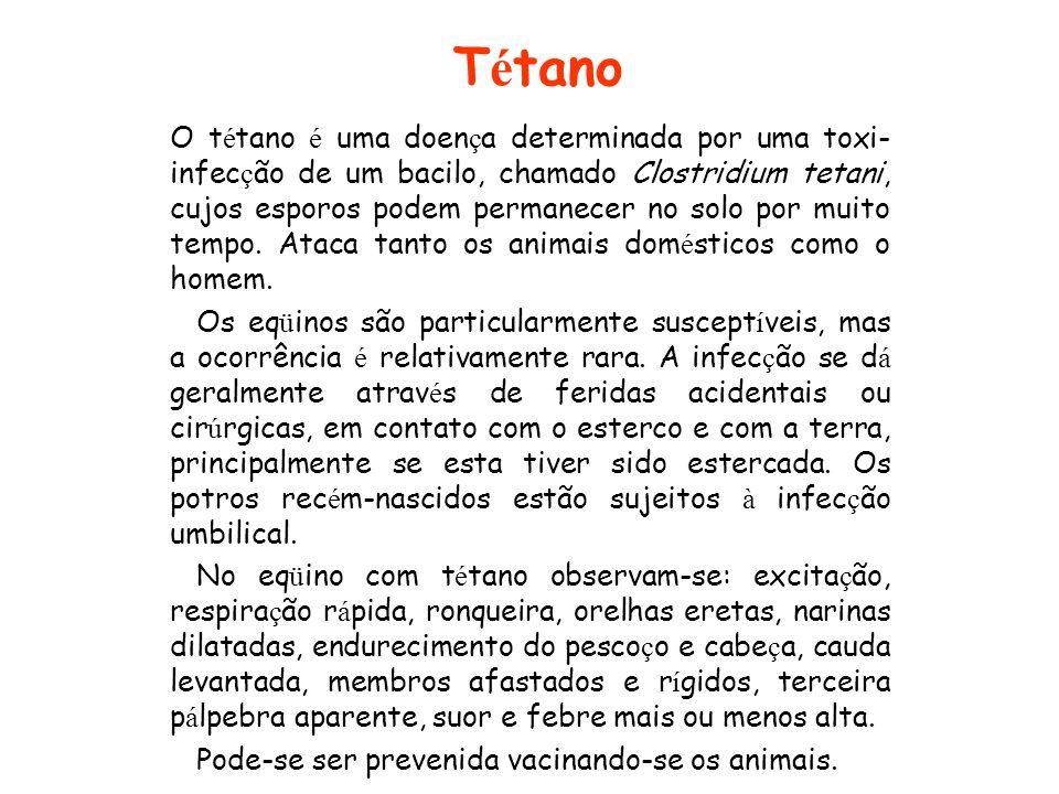T é tano O t é tano é uma doen ç a determinada por uma toxi- infec ç ão de um bacilo, chamado Clostridium tetani, cujos esporos podem permanecer no so