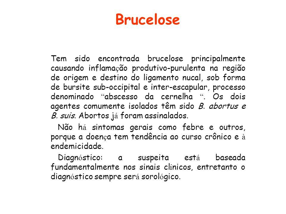 Brucelose Tem sido encontrada brucelose principalmente causando inflama ç ão produtivo-purulenta na região de origem e destino do ligamento nucal, sob