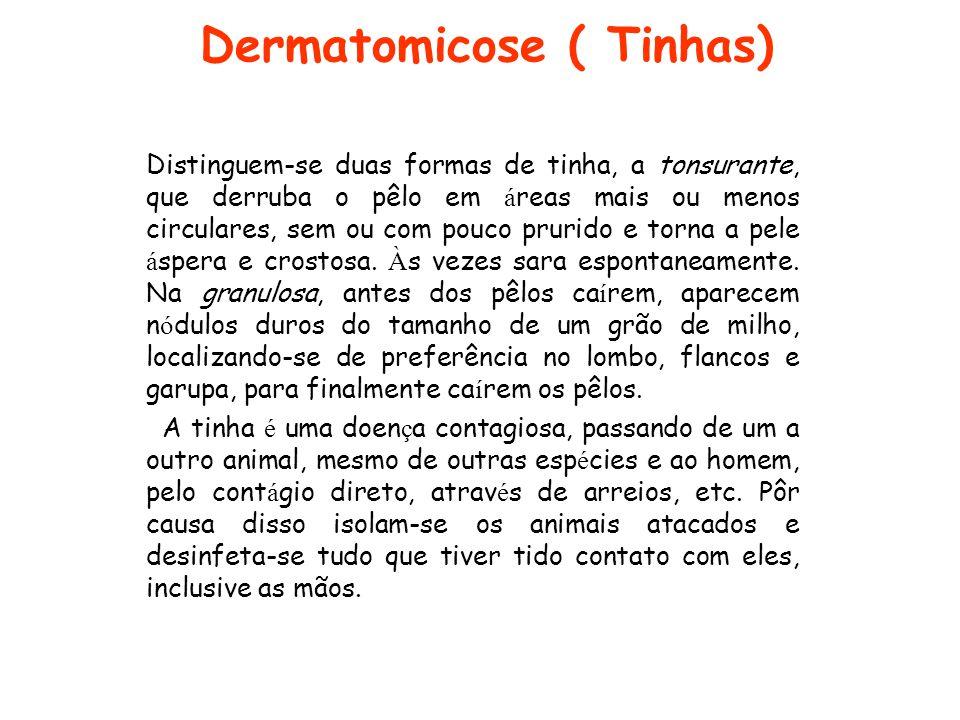 Dermatomicose ( Tinhas) Distinguem-se duas formas de tinha, a tonsurante, que derruba o pêlo em á reas mais ou menos circulares, sem ou com pouco prur