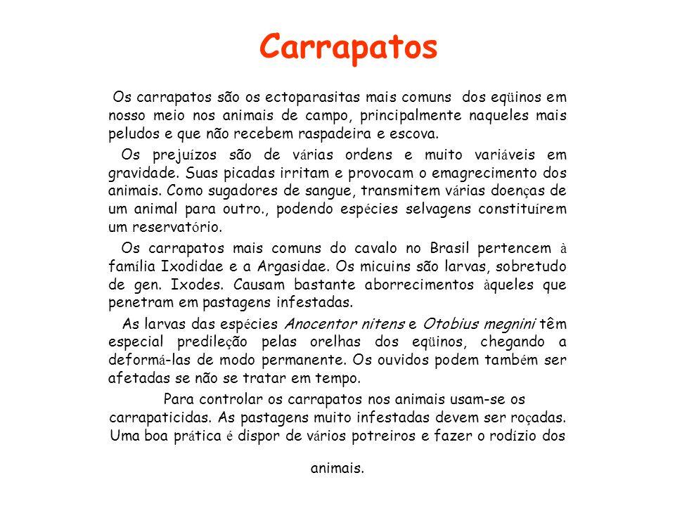 Carrapatos Os carrapatos são os ectoparasitas mais comuns dos eq ü inos em nosso meio nos animais de campo, principalmente naqueles mais peludos e que