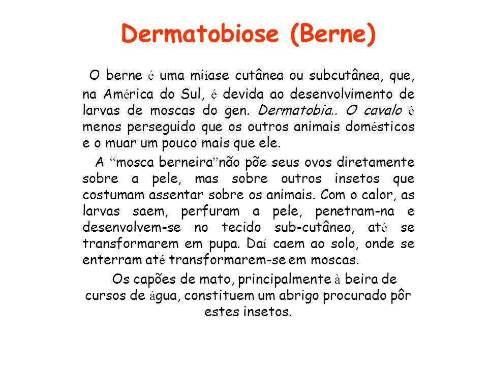 Dermatobiose (Berne) O berne é uma mi í ase cutânea ou subcutânea, que, na Am é rica do Sul, é devida ao desenvolvimento de larvas de moscas do gen. D