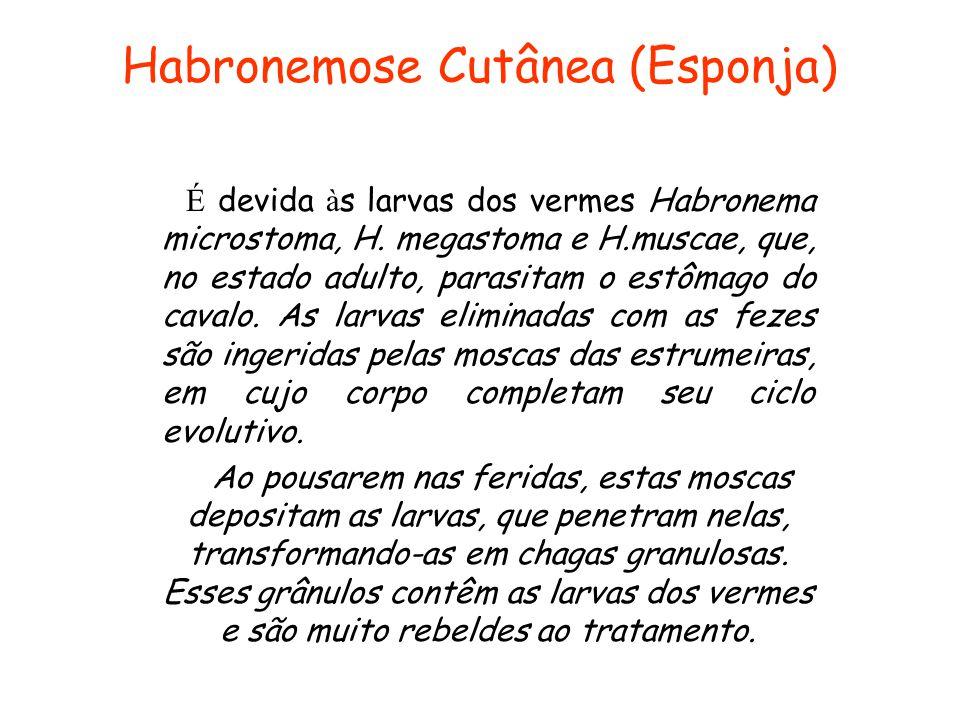 Habronemose Cutânea (Esponja) É devida à s larvas dos vermes Habronema microstoma, H. megastoma e H.muscae, que, no estado adulto, parasitam o estômag