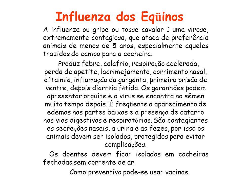 Influenza dos Eq ü inos A influenza ou gripe ou tosse cavalar é uma virose, extremamente contagiosa, que ataca de preferência animais de menos de 5 an