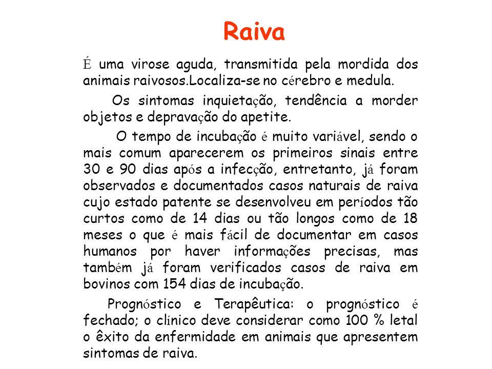 Raiva É uma virose aguda, transmitida pela mordida dos animais raivosos.Localiza-se no c é rebro e medula. Os sintomas inquieta ç ão, tendência a mord