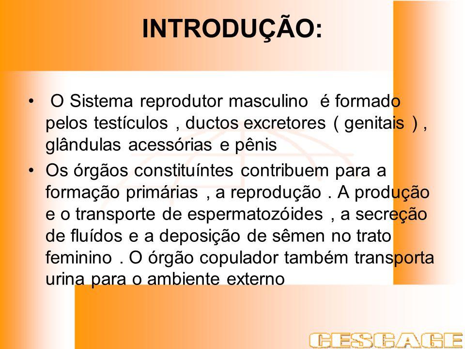 INTRODUÇÃO: O Sistema reprodutor masculino é formado pelos testículos, ductos excretores ( genitais ), glândulas acessórias e pênis Os órgãos constitu