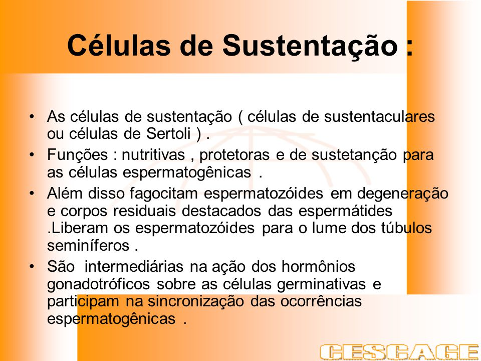 Células de Sustentação : As células de sustentação ( células de sustentaculares ou células de Sertoli ). Funções : nutritivas, protetoras e de susteta