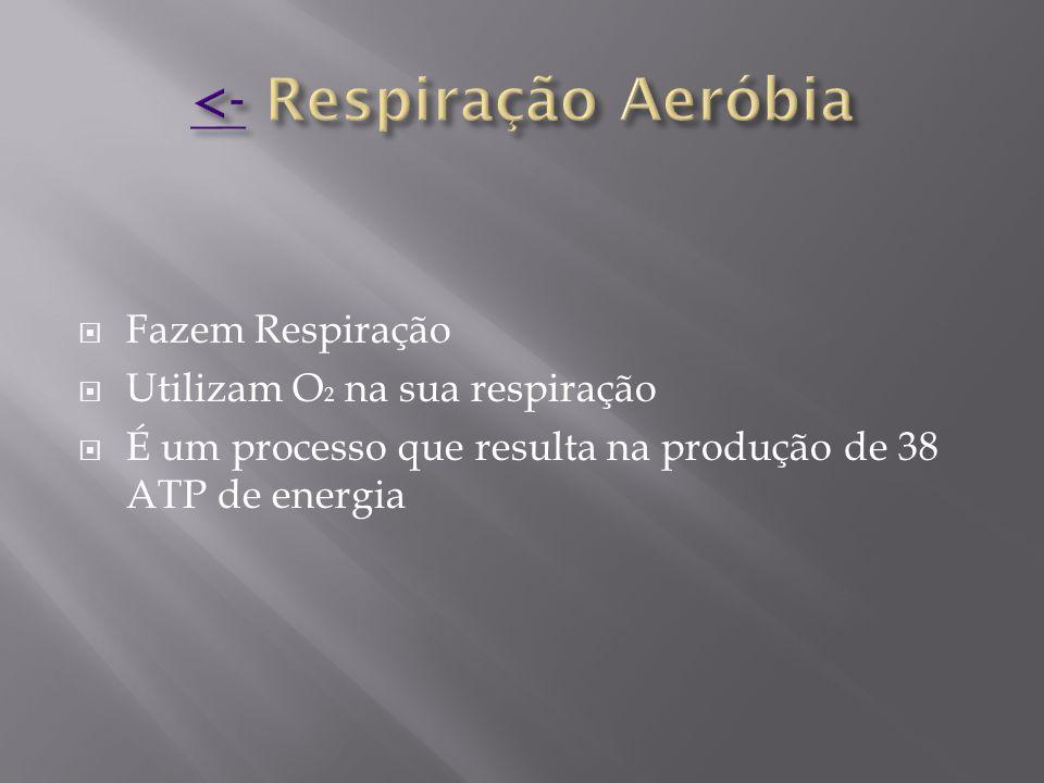  Fazem Respiração  Utilizam O 2 na sua respiração  É um processo que resulta na produção de 38 ATP de energia