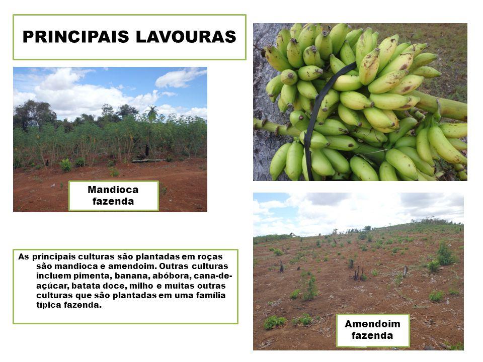 PRINCIPAIS LAVOURAS As principais culturas são plantadas em roças são mandioca e amendoim.