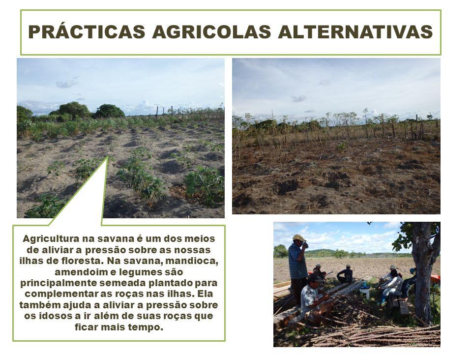 PRÁCTICAS AGRICOLAS ALTERNATIVAS Agricultura na savana é um dos meios de aliviar a pressão sobre as nossas ilhas de floresta.