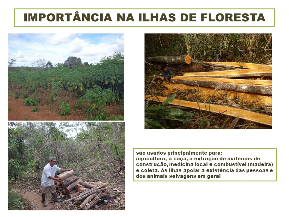 OUTROS BENEFÍCIOS DE ILHAS DE FLORESTA As ilhas apoiar a comunidade, fornecendo medicamentos, abrigo, comida e ar fresco.