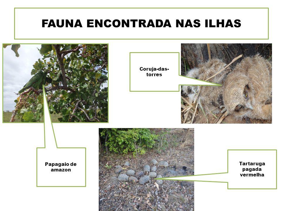 FAUNA ENCONTRADA NAS ILHAS Tartaruga pagada vermelha Papagaio de amazon Coruja-das- torres