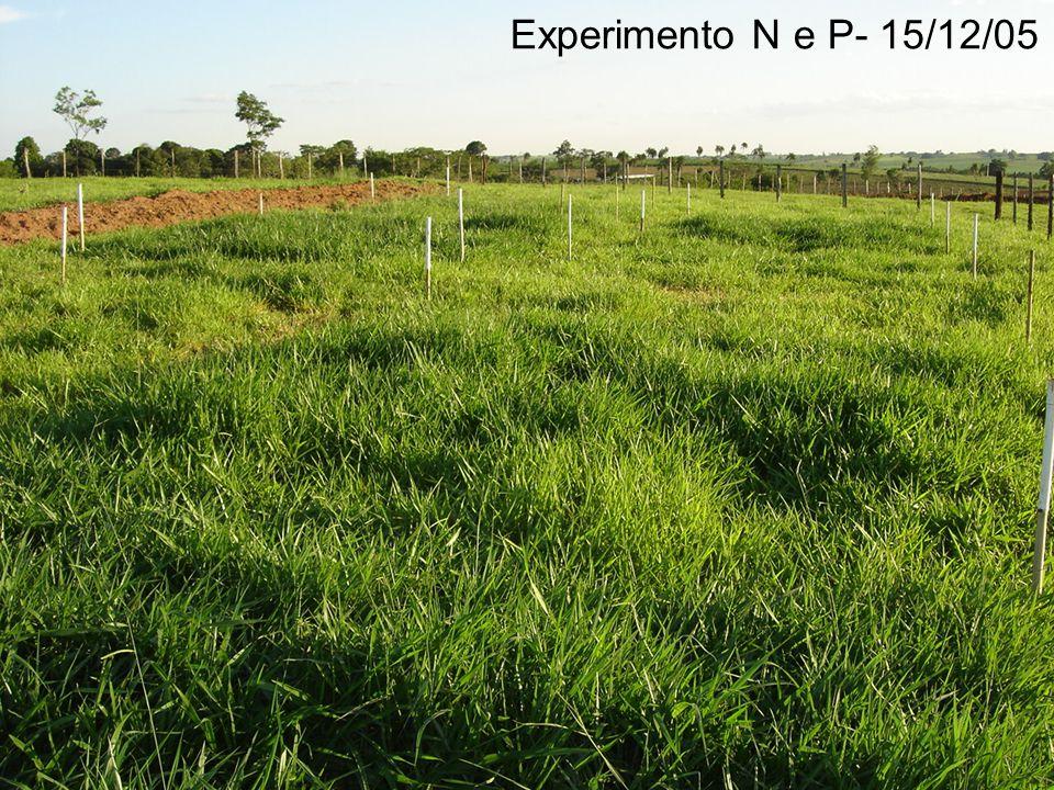 Experimento N e P- 15/12/05