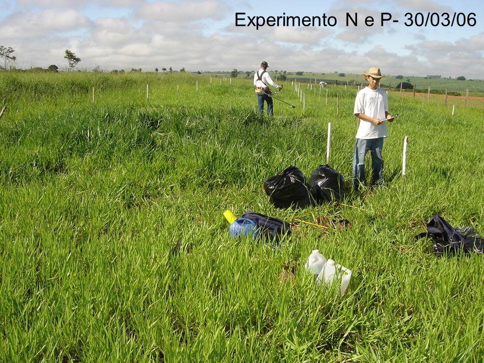 Experimento N e P- 30/03/06