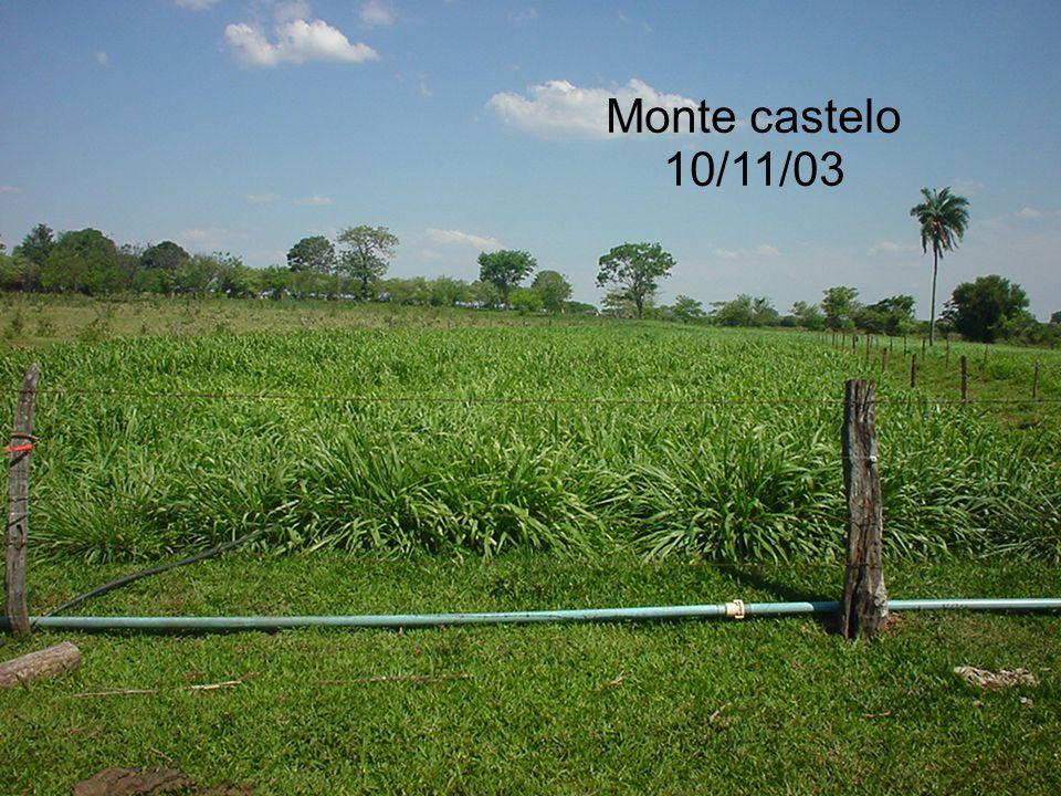 Monte castelo 10/11/03