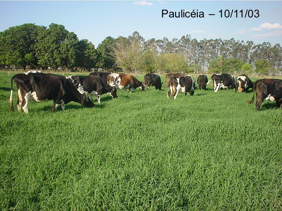 Paulicéia – 10/11/03