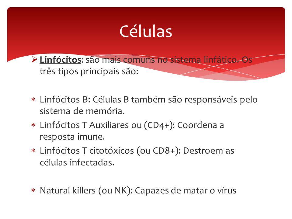  Linfócitos: são mais comuns no sistema linfático. Os três tipos principais são:  Linfócitos B: Células B também são responsáveis pelo sistema de me
