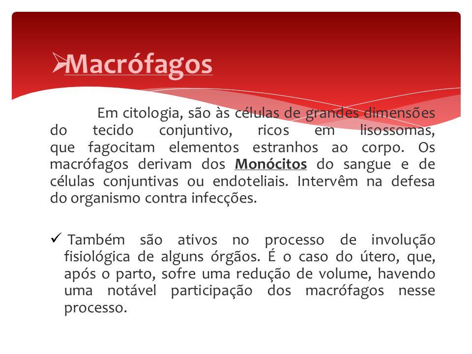  Macrófagos Em citologia, são às células de grandes dimensões do tecido conjuntivo, ricos em lisossomas, que fagocitam elementos estranhos ao corpo.