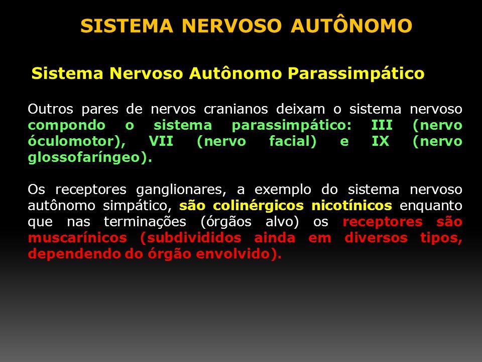 Outros pares de nervos cranianos deixam o sistema nervoso compondo o sistema parassimpático: III (nervo óculomotor), VII (nervo facial) e IX (nervo gl