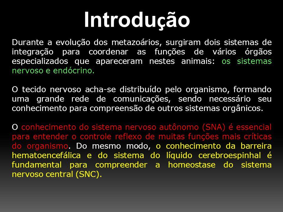 Efeitos do SNA Estimulação simpática Estimulação parassimpática Glândulas gastrointestinais vasoconstrição Estimulação de secreção Glândulas sudoríparassudaçãoNenhum Rim Diminuição da produção de urina Nenhum Ato sexual masculinoEjaculaçãoEreção Glicose sangüíneaAumentoNenhum Metabolismo basal Aumento em até 50% Nenhum Atividade mentalAumentoNenhum Secreção da medula supra-renal (adrenalina) AumentoNenhum Fígado Liberação de glicose Nenhum