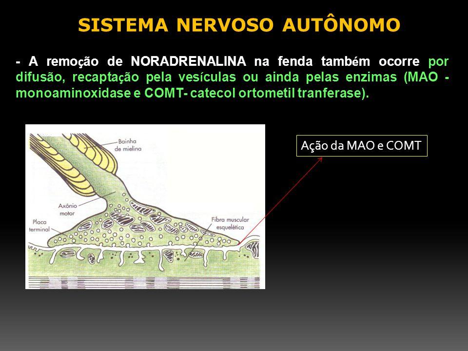 - A remo ç ão de NORADRENALINA na fenda tamb é m ocorre por difusão, recapta ç ão pela ves í culas ou ainda pelas enzimas (MAO - monoaminoxidase e COM