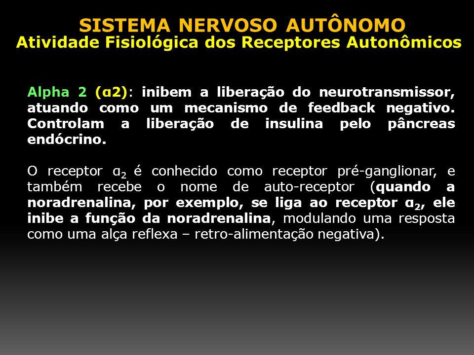 Alpha 2 (α2): inibem a liberação do neurotransmissor, atuando como um mecanismo de feedback negativo. Controlam a liberação de insulina pelo pâncreas