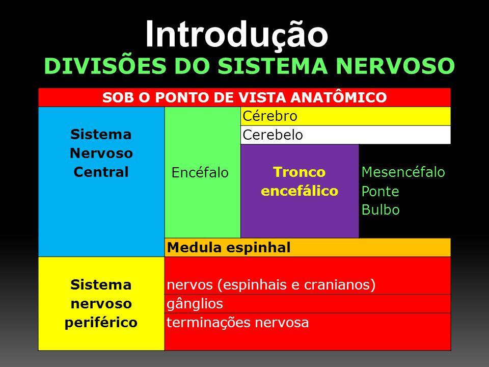 DIVISÕES DO SISTEMA NERVOSO SOB O PONTO DE VISTA ANATÔMICO Sistema Nervoso Central Encéfalo Cérebro Cerebelo Tronco encefálico Mesencéfalo Ponte Bulbo