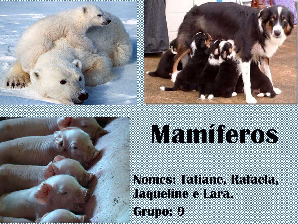 Mamíferos Nomes: Tatiane, Rafaela, Jaqueline e Lara. Grupo: 9
