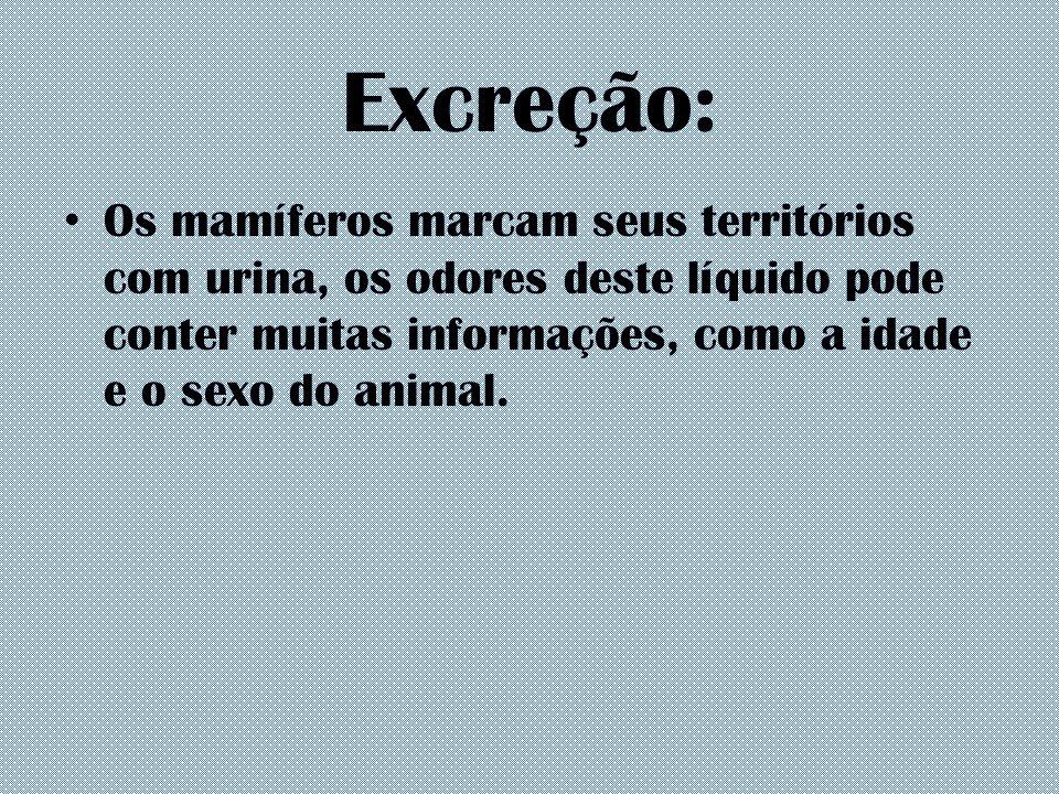 Excreção: Os mamíferos marcam seus territórios com urina, os odores deste líquido pode conter muitas informações, como a idade e o sexo do animal.