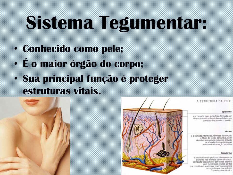 Sistema Tegumentar: Conhecido como pele; É o maior órgão do corpo; Sua principal função é proteger estruturas vitais.