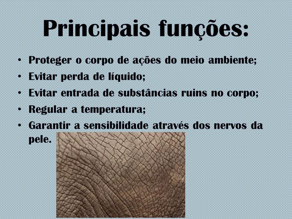 Principais funções: Proteger o corpo de ações do meio ambiente; Evitar perda de líquido; Evitar entrada de substâncias ruins no corpo; Regular a tempe