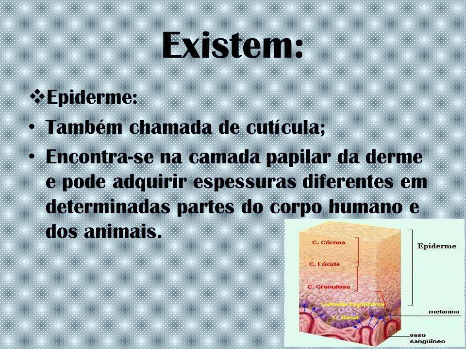 Existem:  Epiderme: Também chamada de cutícula; Encontra-se na camada papilar da derme e pode adquirir espessuras diferentes em determinadas partes d