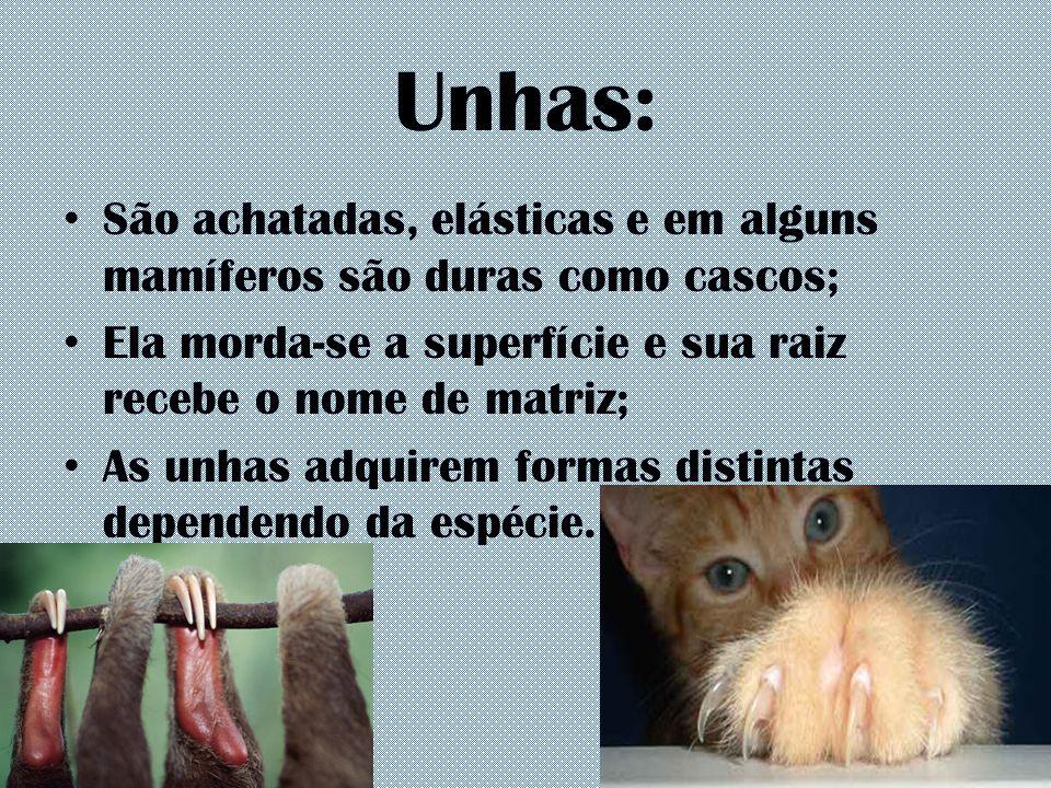Unhas: São achatadas, elásticas e em alguns mamíferos são duras como cascos; Ela morda-se a superfície e sua raiz recebe o nome de matriz; As unhas ad
