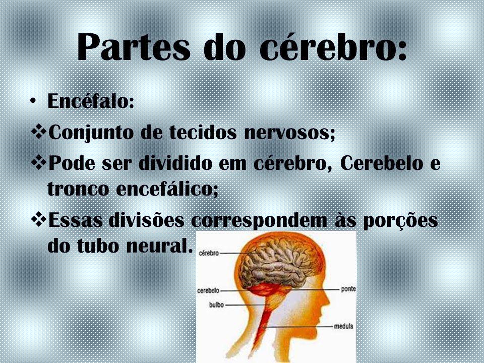 Partes do cérebro: Encéfalo:  Conjunto de tecidos nervosos;  Pode ser dividido em cérebro, Cerebelo e tronco encefálico;  Essas divisões correspond
