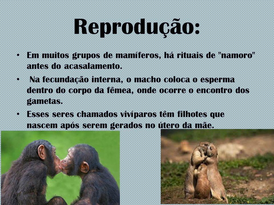 Reprodução: Em muitos grupos de mamíferos, há rituais de