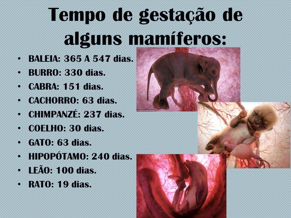 Tempo de gestação de alguns mamíferos: BALEIA: 365 A 547 dias. BURRO: 330 dias. CABRA: 151 dias. CACHORRO: 63 dias. CHIMPANZÉ: 237 dias. COELHO: 30 di