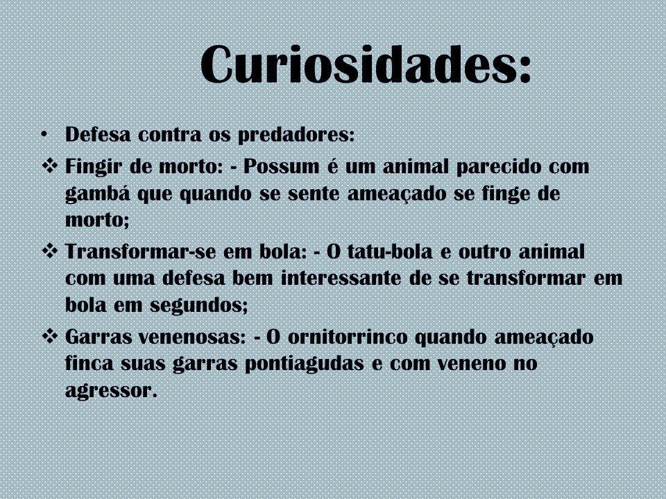 Curiosidades: Defesa contra os predadores:  Fingir de morto: - Possum é um animal parecido com gambá que quando se sente ameaçado se finge de morto;