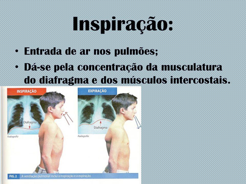 Inspiração: Entrada de ar nos pulmões; Dá-se pela concentração da musculatura do diafragma e dos músculos intercostais.