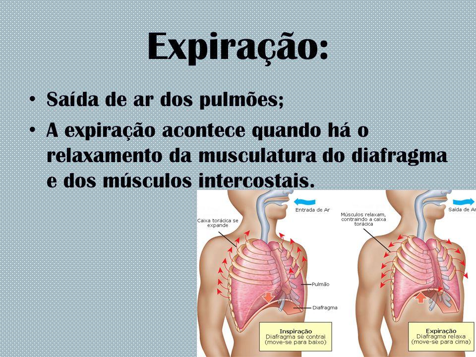 Expiração: Saída de ar dos pulmões; A expiração acontece quando há o relaxamento da musculatura do diafragma e dos músculos intercostais.