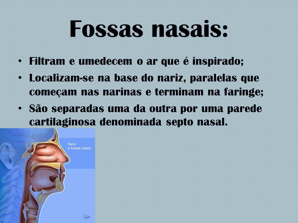 Fossas nasais: Filtram e umedecem o ar que é inspirado; Localizam-se na base do nariz, paralelas que começam nas narinas e terminam na faringe; São se