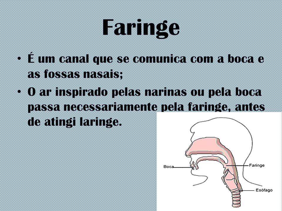 Faringe É um canal que se comunica com a boca e as fossas nasais; O ar inspirado pelas narinas ou pela boca passa necessariamente pela faringe, antes