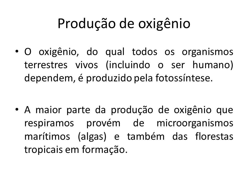 Produção de oxigênio O oxigênio, do qual todos os organismos terrestres vivos (incluindo o ser humano) dependem, é produzido pela fotossíntese. A maio