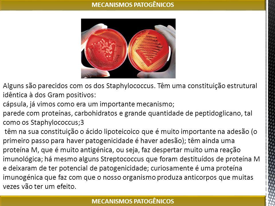 Alguns são parecidos com os dos Staphylococcus. Têm uma constituição estrutural idêntica à dos Gram positivos: cápsula, já vimos como era um important