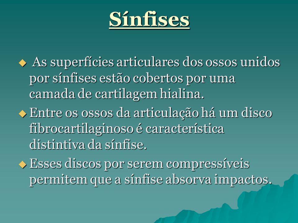 Sínfises  As superfícies articulares dos ossos unidos por sínfises estão cobertos por uma camada de cartilagem hialina.  Entre os ossos da articulaç