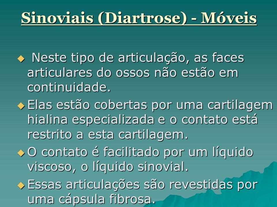 Sinoviais (Diartrose) - Móveis  Neste tipo de articulação, as faces articulares do ossos não estão em continuidade.  Elas estão cobertas por uma car
