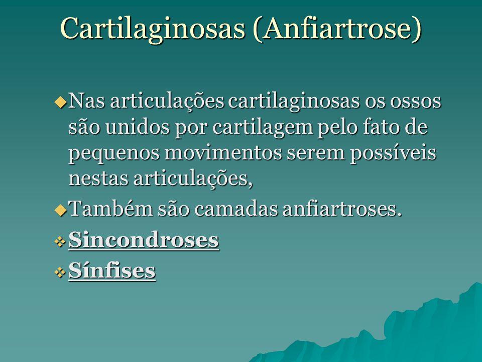 Cartilaginosas (Anfiartrose)  Nas articulações cartilaginosas os ossos são unidos por cartilagem pelo fato de pequenos movimentos serem possíveis nes