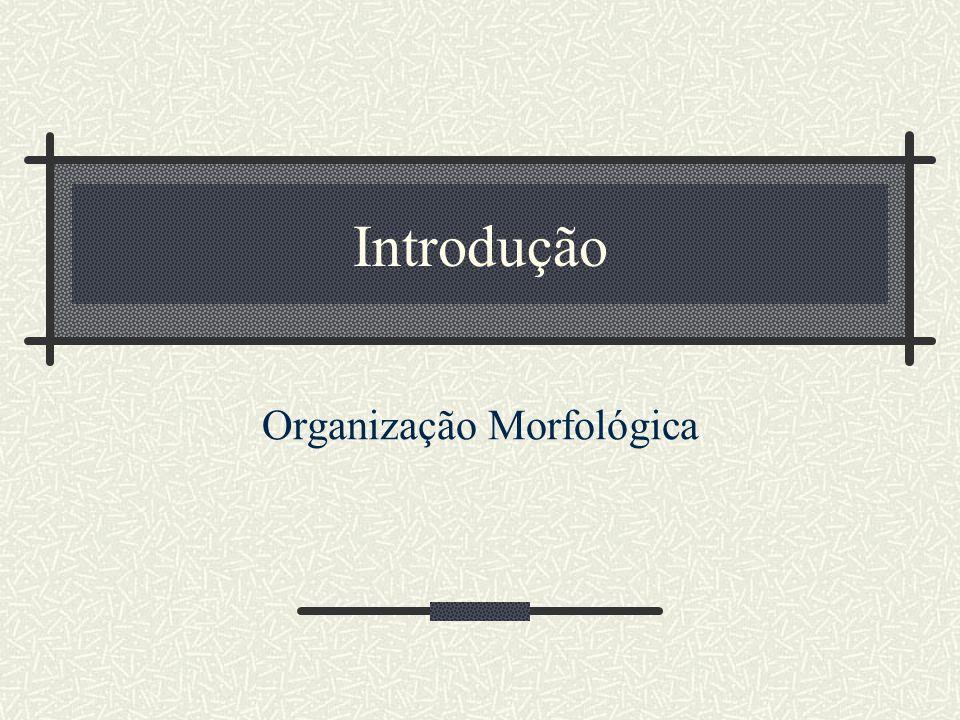 Introdução Organização Morfológica