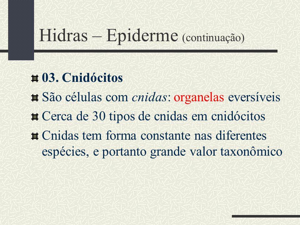Hidras – Epiderme (continuação) 03. Cnidócitos São células com cnidas: organelas eversíveis Cerca de 30 tipos de cnidas em cnidócitos Cnidas tem forma